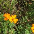 近所の草花