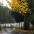 11月23日(木) 雨の朝 午後は晴れ伊佐沼へ