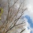 冬の空~Vivaldi - Four Seasons (Winter)