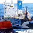 なぜ日本は捕鯨するのか?クジラは日本人にとって重要な「タンパク源」その歴史と必要性を解説