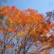 11/9(木)のイキメンニュース~暮らし&身近な法律・判例の情報