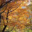 穏やかな秋の一日~檜洞丸