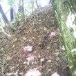 松茸採り 桑の木洞
