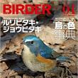 BIRDER1月号にヤイロチョウの写真が使われます
