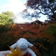 東福寺の紅葉🍁