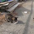 林崎漁港に大きい雄猫が・・・