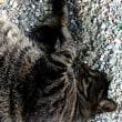 富士川SAのドテ助(猫)