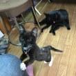 黒猫ジジィです  くるみとプロレス