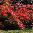 四王寺山の紅葉