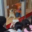 ザギトワ効果で秋田犬人気沸騰 飼育放棄後絶たぬ現実も