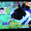 5/19 熊追い犬 カレリア犬
