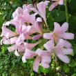 庭は今夏水仙の色ばかり