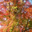 紅葉点景:樹翳の秋