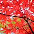 里山を眺めながら-和歌山県かつらぎ町:「思季 うらら」