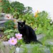 コスモス咲く庭で