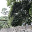 まちのこども園と代々木公園の石垣