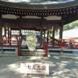 氷川神社菊花展