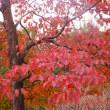 ランチの後は「智光山公園」の薔薇(狭山市)