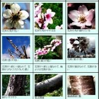 梅 桃 桜