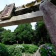 吉備津神社のアジサイ