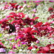 里山ガーデン、花と蝶①