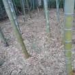 竹林の管理