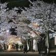 今年ラストのお花見!茅部神社とがいせん桜