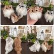 羊毛フェルト愛猫マスコット