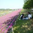 荒川土手の芝桜・・2