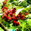 秋の木の実、ハナミズキ、ニシキギ、シロヤマブキ、他