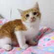 ビビりの新人猫