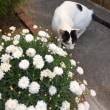 くーさん、お花と写る