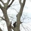 つくもの木登り