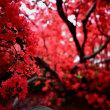 館林つつじが岡公園・お気に入りの木
