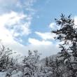 雪の樹々、冬の青空。