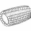 トウモロコシ道