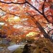 近くのお寺の紅葉