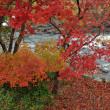 安曇川の紅葉