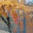 秋の信州バスツアー
