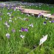 Irisgarten