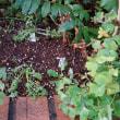 ジギタリス、ニゲラ、ネモフィラを定植