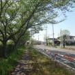 夏の羽生にて ―中川沿いの葉桜―