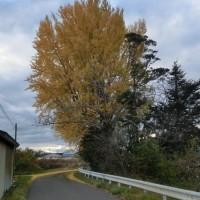苗木の冬支度