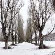 三月中旬木々の冬芽
