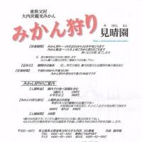 恒例! 東秩父村大内沢みかん狩り! 2017