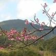春カボチャの定植準備
