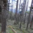 次郎笈周辺に潜む鹿被害 その1