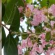 つるりんの花