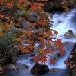 渓流の彩り 妹背の滝