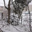 久しぶりの大雪! なんだけど・・・☆このあたりでは驚くほどの積雪じゃないのかも?
